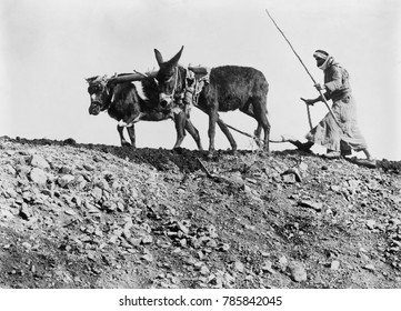 Fellah is the Arabic word for ploughman. In Palestine under the Ottoman Empire, most Arab farmers owned small farms or were tenants of large landowners. They were vulnerable to competition by mechaniz