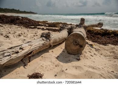 Felled dry trees on sandy sea shore landscape.
