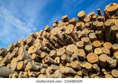 The felled forest. Stacks of felled trees. Logging. Folded trees.
