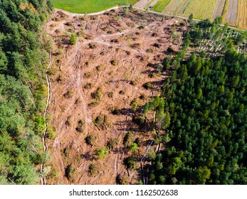 felled forest view from above. cut down forest. drone top view