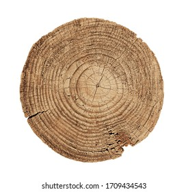 Felled piece of wood from a tree trunk with growth rings isolated on white. Natural vintage wood texture.