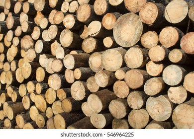 Felled and stacked pine tree ready for processing