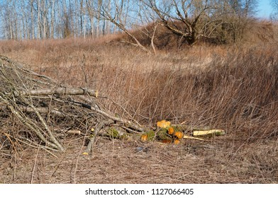 felled tree branches, felling, felled tree branches in the field, deforestation