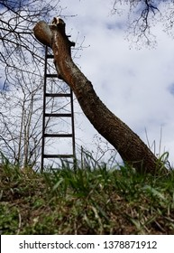 Felled tree trunk without branches standing with ladder