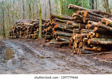 felled trees, deforestation, logs along the road