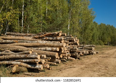 The felled trees folded near the forest. Sawmill and Woodworking Industry