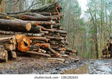 felled trees in the forest, logging on the roadsides