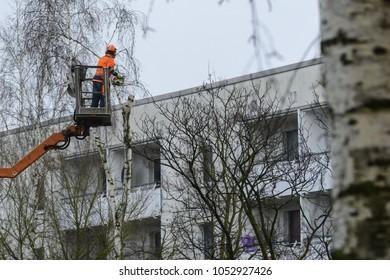 Felling trees in a German residential area