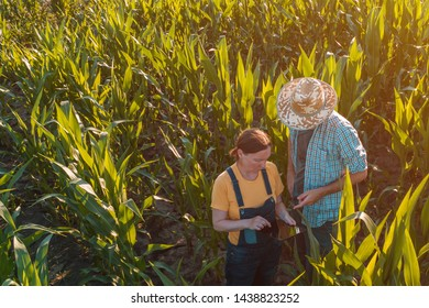 Female agronomist with tablet computer advising corn farmer in cultivated crop field, high angle view from drone pov