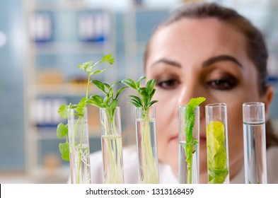 Female biotechnology scientist chemist working in the lab