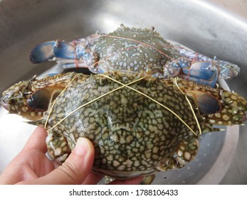 A female blue crab has a duller green/brown with a more rounded carapace, with their sweet, nutty flavor, and evenly textured, moist, firm flesh, blue swimmer crabs make superb eating
