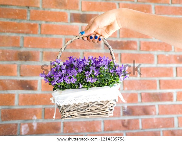 Female with blue manicure holding basket of purple flowers in full bloom towards orange brick wall