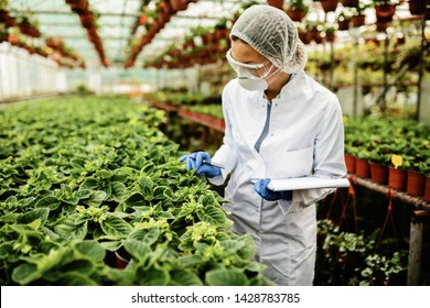 Female botanist examining growth of potted plants in a greenhouse.