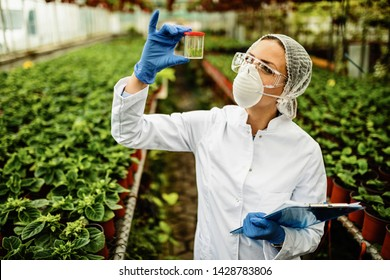 Female botanist examining plant sample during quality control inspection in a greenhouse.