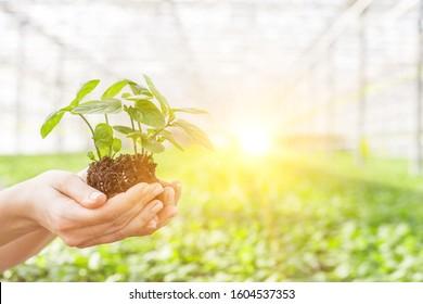 Female botanist holding seedling in plant nursery
