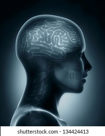 Female brain medical x-ray scan