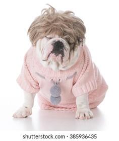 female bulldog wearing blonde wig and pink sweater