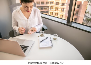 Female Cannabis Entrepreneur holding  a Bud, Working on Marketing for Marijuana Business in Bright, Soft Lit Office