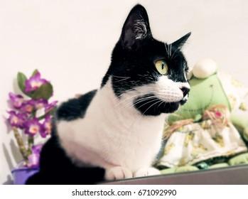 Female Cat Watching