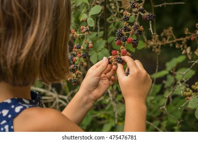 female child wild Blackberry picking