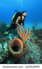 Female diver with a coral sponge on the foreground