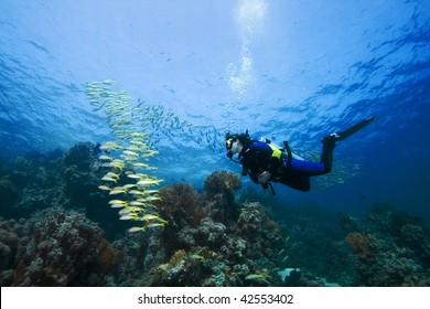 Female diver and Goatfish over a beautiful coral reef in the Red Sea, Egypt