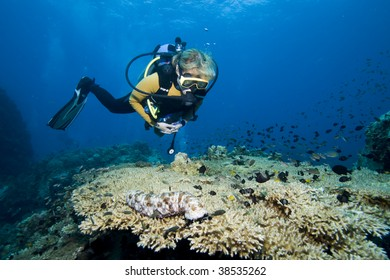 Female diver hovering over coral and fishes