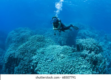 Female diver hovering over huge corals in the Red Sea, Egypt