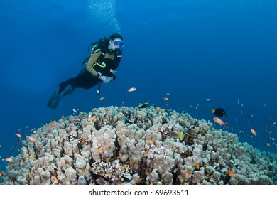 Female diver hovering over a huge coral in the Red Sea, Egypt