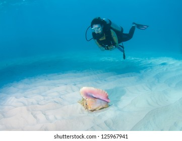 Female diver looking at a conch shell on a sandy seabed