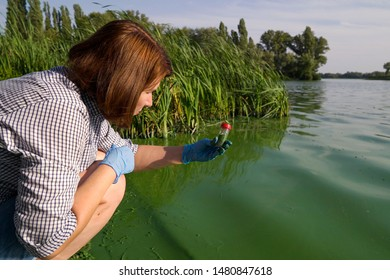 female ecologist takes samples of river water infected with green algae in tube