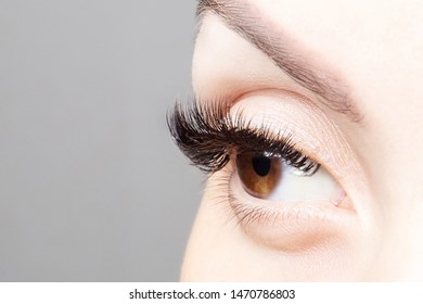 Female eye with beautiful long eyelashes, close-up. Brown color eye lash extension, 3D or 4D volume. Eyelash care, lamination, extensions, coloring, curling.