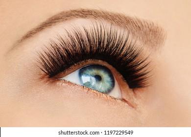 Female eye with extreme long false eyelashes and black liner. Eyelash extensions, make-up, cosmetics, beauty. Close up, macro