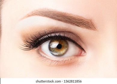 Female eye with long eyelashes, beautiful makeup and light brown eyebrow close-up. Eyelash extensions, lamination, microblading, cosmetology, ophthalmology concept.