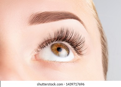 Female eye with long eyelashes. Classic 1D, 2D eyelash extensions and light brown eyebrow close up. Eyelash extensions, lamination, biowave, microblading concept.