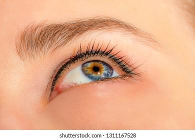 Female eye with long eyelashes and professional make-up close-up macro