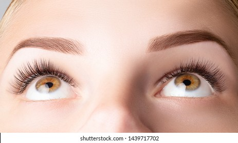 Female eye with long false eyelashes. Classic 1D, 2D eyelash extensions and light brown eyebrow close up. Eyelash extensions, lamination, biowave, microblading concept.