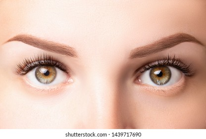 Female eyes with long eyelashes. Classic 1D, 2D eyelash extensions and light brown eyebrow close up. Eyelash extensions, lamination, biowave, microblading concept.