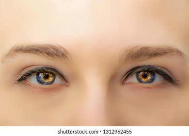 Female eyes with long eyelashes and professional make-up close-up macro