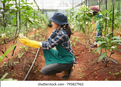 Female farm worker checking plants at hothouse