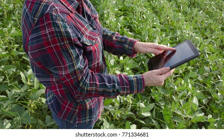 Female farmer or agronomist examining green soybean plant in field using tablet