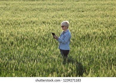 Female farmer or agronomist inspect quality of green wheat plants in field using tablet, view above, spring time