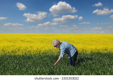 Female farmer or agronomist inspecting quality of wheat in early spring  with canola field and sky in background, selective focus on woman