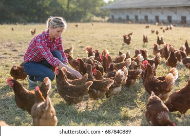 female farmer looking for eggs