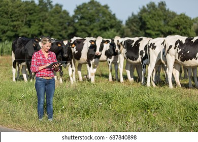 female farmer proud to work with her cows herd