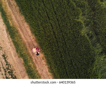 Female farmer using digital tablet computer in green wheat field, drone point of view