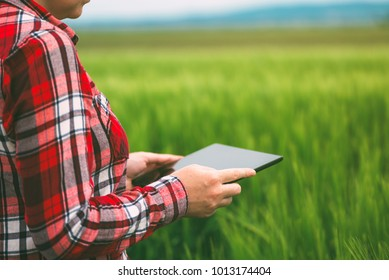 Female farmer using tablet computer in wheat crop field, concept of modern smart farming by using electronics, technology and mobile apps in agricultural production
