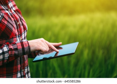 Female farmer using tablet computer in rye crop field, concept of modern smart farming by using electronics, technology and mobile apps in agricultural production