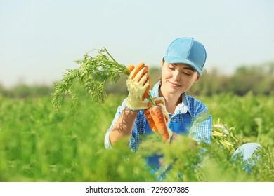 Female farmer working in carrot field