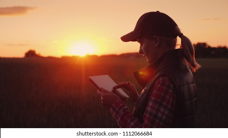 A female farmer is working in the field at sunset, enjoying a tablet. Technologies in agrobusiness